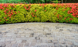 Red Ixora coccinea hedge and walkway Royalty Free Stock Images