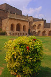 Red Ixora Plant in Golkonda Fort Stock Photo