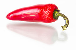 Red Jalapeno hot pepper. On white background Stock Images