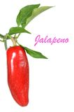 Red  Jalapeno Royalty Free Stock Photo
