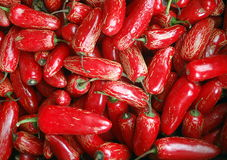 Red Jalapeno Peppers Stock Photography