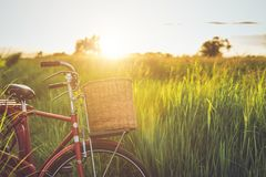 Red Japan style classic bicycle at the green field. In sunset time royalty free stock image
