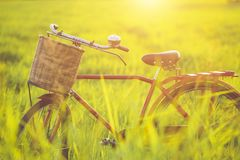 Red Japan style classic bicycle at the green field. In sunset time royalty free stock photography