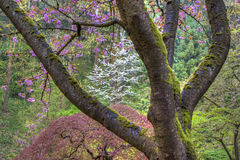 Red Japanese maple Stock Photos