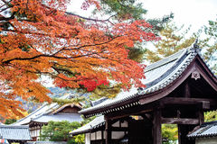 Red japanese maple autumn fall Stock Photo