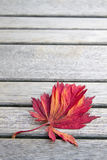 Red Japanese Maple Leaf on Wood Bench Background Stock Photo