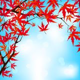 Red Japanese Maple leaves against blue sky. EPS 8 Royalty Free Stock Images