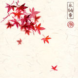 Red japanese maple leaves on handmade rice paper background. Traditional oriental ink painting sumi-e, u-sin, go-hua. Contains hieroglyphs - eternity, freedom Stock Photo