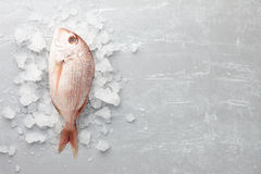Red Japanese seabream Royalty Free Stock Photos