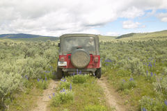 Red Jeep travels through spring flowers of Centennial Valley near Lakeview, MT Royalty Free Stock Photography