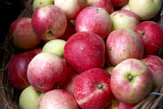 Red juicy apples in the basket. Close-up of many red juicy apples in the basket Stock Photography
