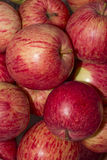 Red juicy apples close-up rotating. Macro. Royalty Free Stock Image