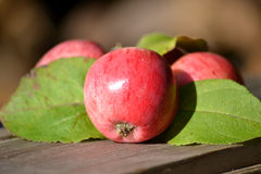 Red juicy apples with leaves Royalty Free Stock Photos