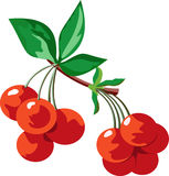 Red juicy ripe cherries Royalty Free Stock Photos