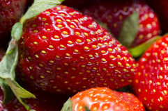 Red juicy strawberry Stock Photography