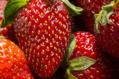 Red juicy strawberry Royalty Free Stock Image