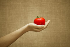 Red juicy tomato in female hand Stock Photography