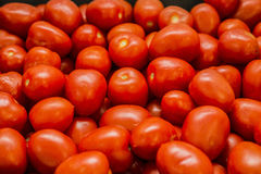 Red juicy tomatoes Stock Photography