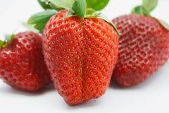 Red juicy wet strawberries Royalty Free Stock Image