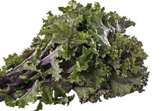 Red Kale. A bunch of fresh Red Kale with it's red tinged leaves and purple stems and veins Stock Photo