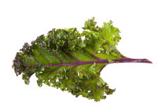 Red kale Royalty Free Stock Photo