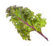 Red kale Royalty Free Stock Photos