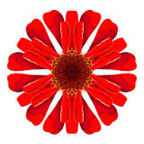Red Kaleidoscopic Dahlia Flower Mandala Isolated on White Stock Images
