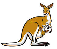 Red kangaroo with joey in pouch Royalty Free Stock Photography