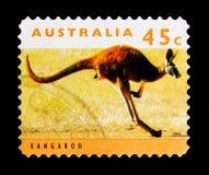 Red Kangaroo Macropus rufus, Kangaroos and Koalas serie, circa 1994 Royalty Free Stock Photography