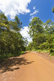 Red Karura Forest Road, Nairobi, Kenya Royalty Free Stock Photo