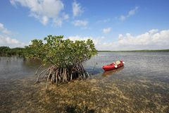 Free Red Kayak Tied To Mangoves On The Turtle Grass Flats Of Biscayne National Park, Florida. Royalty Free Stock Photos - 148869838