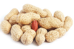 Red kernel in peanut shells Royalty Free Stock Image