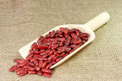 Red Kidney Beans on a Shovel Royalty Free Stock Photos