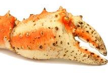 Red king crab leg Stock Images