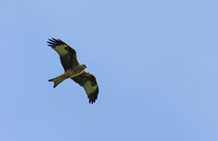 Red kite. Royalty Free Stock Photo