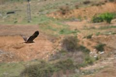 Red kite in abandoned area royalty free stock photos
