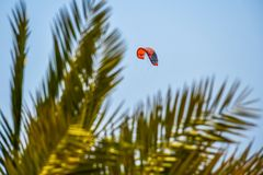 Red kite surf flying high in the sky over the palm tree stock images