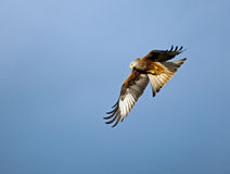 Red Kite Turning Royalty Free Stock Image
