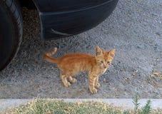 Red kitten. Under machine Stock Images