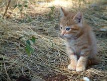 Red kitten stock photography