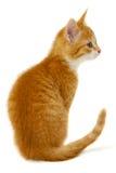 Red kitten Stock Photos