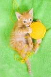 Red kitten Royalty Free Stock Photo