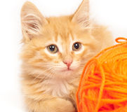 Red kitten Royalty Free Stock Photo
