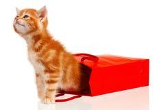 Red kitten Royalty Free Stock Image