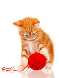 Red kitten Royalty Free Stock Images