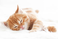 Free Red Kitten Royalty Free Stock Photos - 40972428