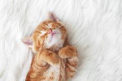 Free Red Kitten Stock Photo - 41348040