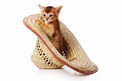 Free Red Kitten Abyssinian Cat Sitting In A Hat Isolated On White Royalty Free Stock Photo - 175844095