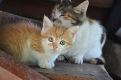 Red kitten with an adult cat Stock Photo