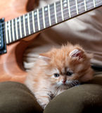 Red kitten asleep in the arms of men. Playing the guitar stock photo